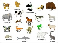 All_animals