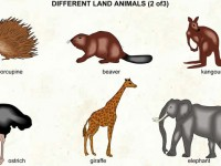 Different_land_animals_