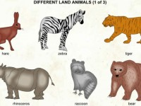 Different_land_animals_1